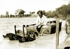 May Brown feeding swans in boat made by Jock Brown, Earlston 1930s
