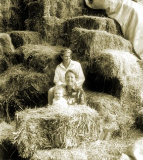 Good hay season, Sienjt, Hillinger and Abbey, Koonda.