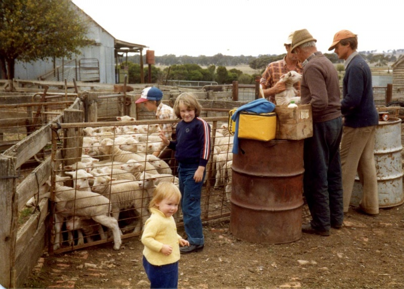 Lamb-marking-at-Lynfielf,-David,-Roslyn,-and-Susan-Metzke,-Jeff,-Jack-and-Gavin-Wall-Metzke-colle.jpg