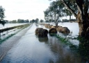 Graeme Huckers hay flooded over two fences